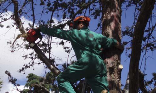 Resultado de imagen para FP Trabajos Forestales y de Conservación del Medio Natura