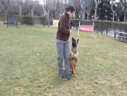 formacion de adiestramiento canino obediencia basica