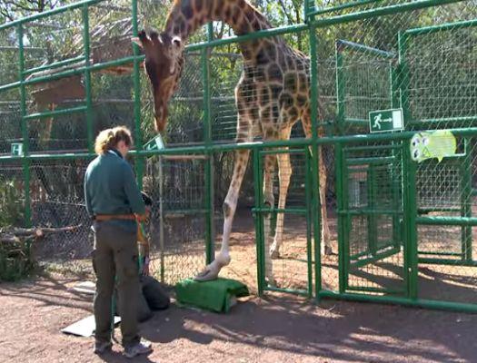 formacion de auxiliar veterinario de animales exoticos 2016