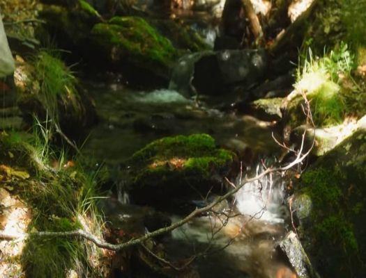 formacion de especialista en gestion de espacios naturales