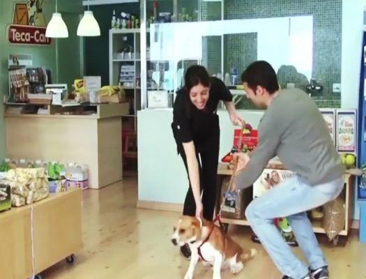 formacion de marketing y gestion de establecimientos de animales