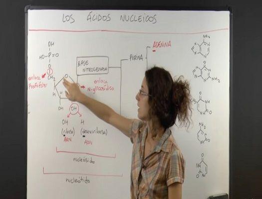 formacion de tecnicas de analisis cromosoicos y acidos nucleicos