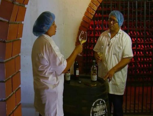 fp elaboracion de vinos y otras bebidas