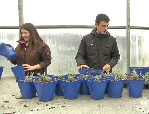 fp grado medio en jardineria y floristeria
